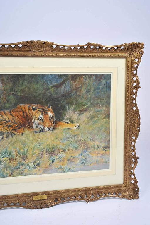 A fine quality watercolour signed Arthur Wardle, of a tiger in the bush. Entitled; 'Midday rest'  Mounted in a carved and gilded gesso frame.  Arthur Wardle was an English painter. Born in London, aged just 16 Wardle had a piece displayed at the