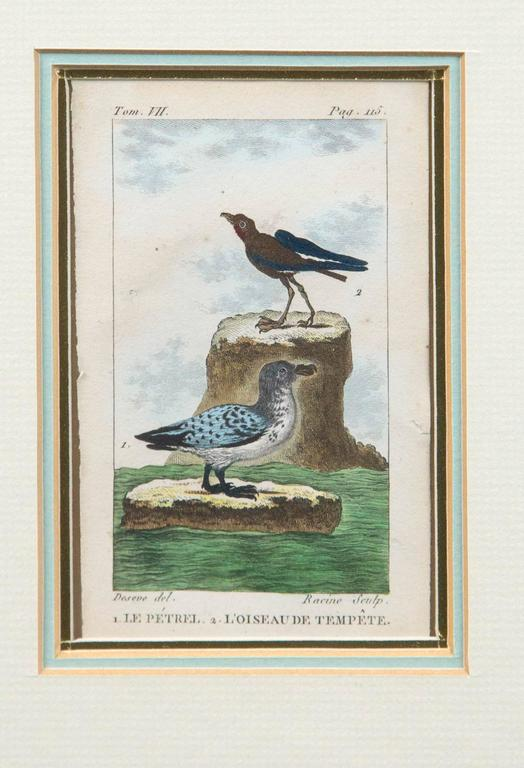 Antique French Engraving of Birds, Paris, Late 18th Century In Good Condition For Sale In Chappaqua, NY