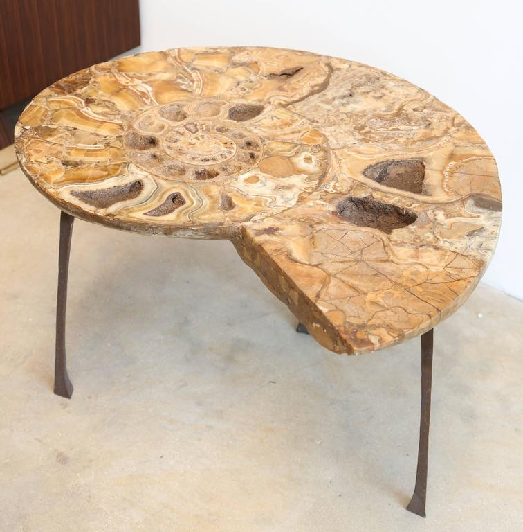 Terrific Coffee Or Sofa Table A Fossil Of Ammonite Standing On A Spiritservingveterans Wood Chair Design Ideas Spiritservingveteransorg