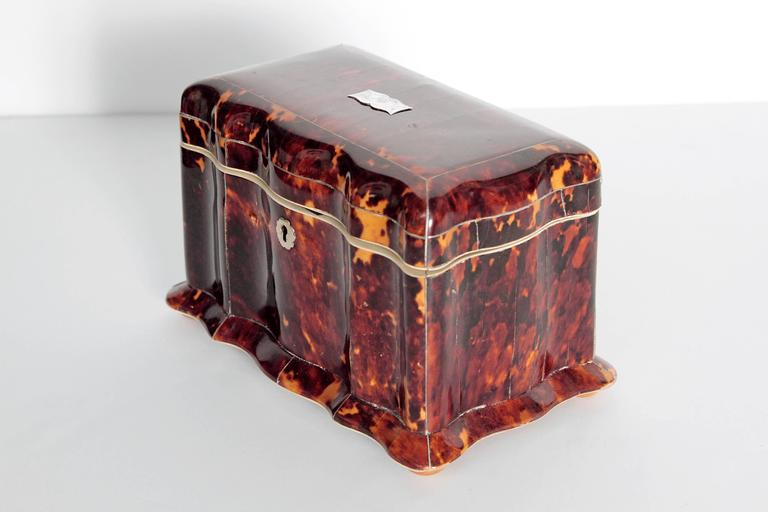 19th century English tortoiseshell tea caddy with undulating front and scalloped base with bun feet. The interior with two unlined compartments for tea, each lid with tortoise shell and silver painted knobs. Interior base and lid lined in bone with