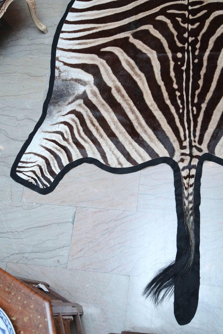 "Superb ""Burchell"" Zebra Hide Rug 2"