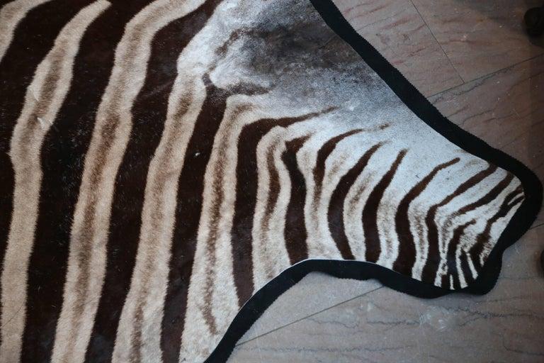 "Superb ""Burchell"" Zebra Hide Rug 3"