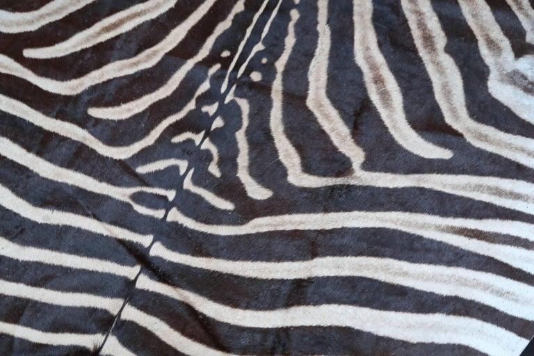 "Superb ""Burchell"" Zebra Hide Rug 7"