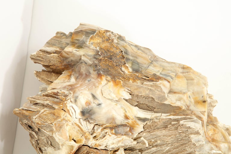 Large Petrified Wood Specimen In Excellent Condition For Sale In New York, NY