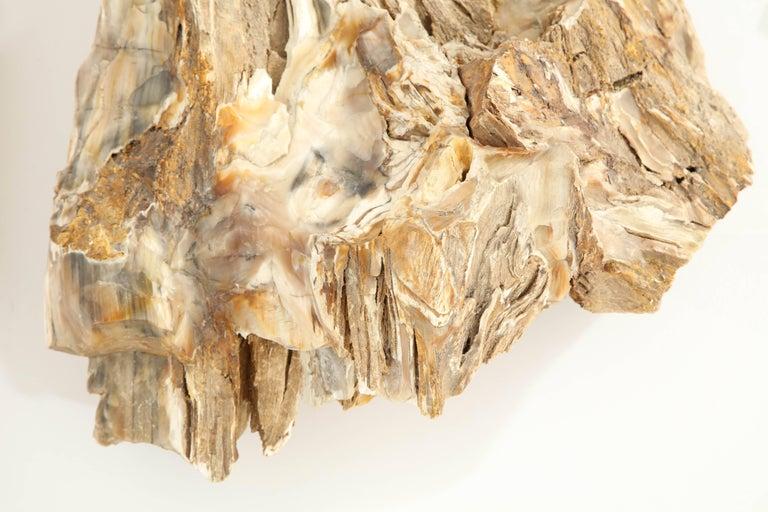 20th Century Large Petrified Wood Specimen For Sale