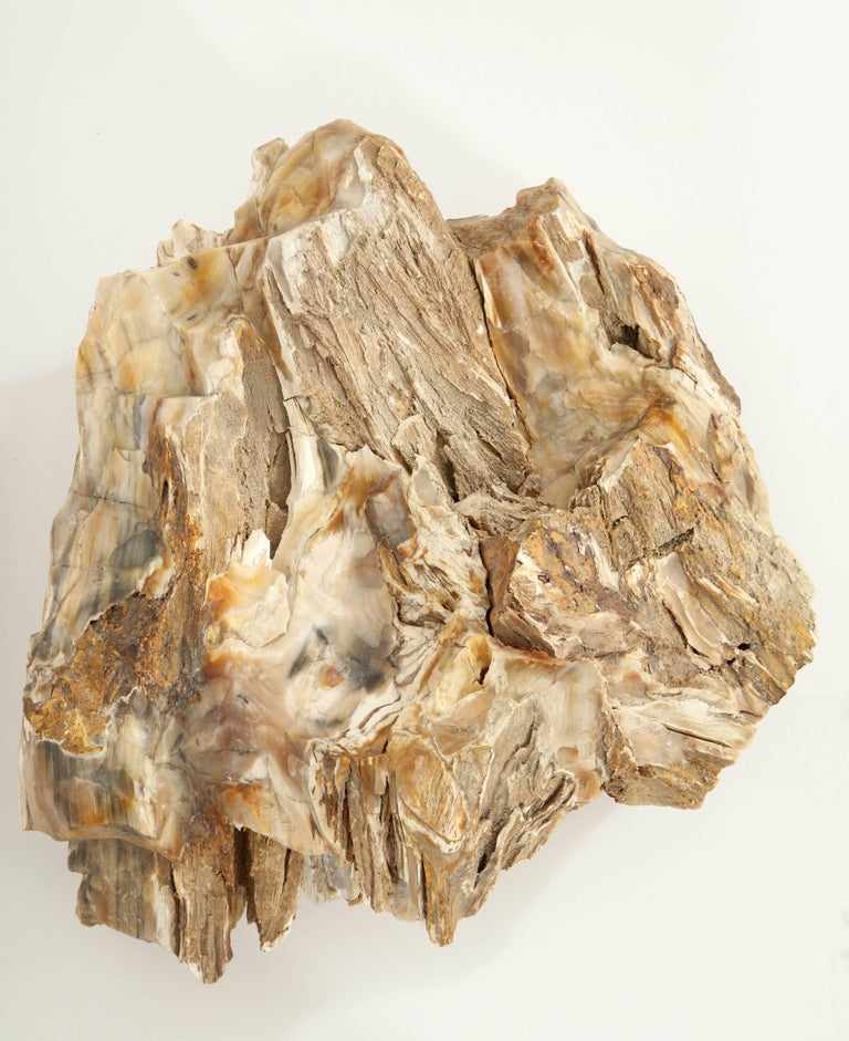 Large Petrified Wood Specimen For Sale 1
