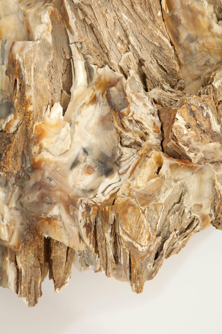 Large Petrified Wood Specimen For Sale 2