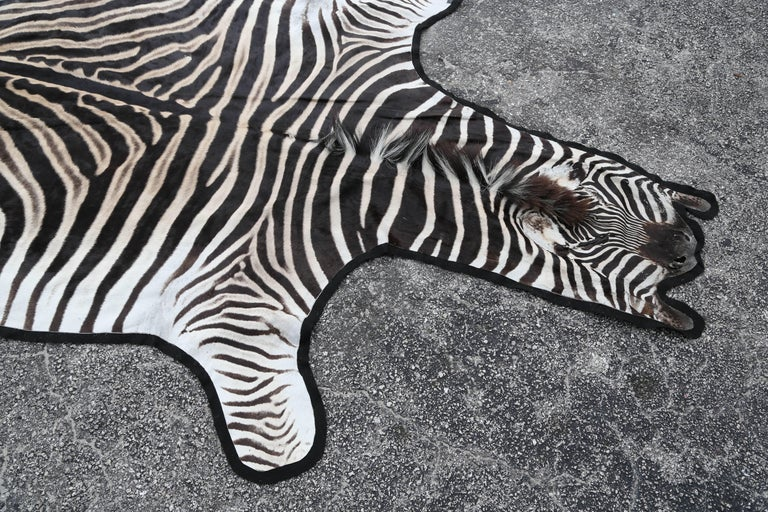 South African Fine Burchell Zebra Rug For Sale