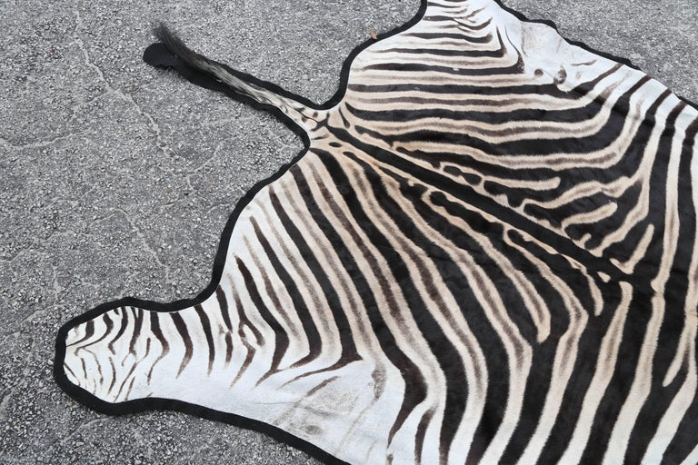 Fine Burchell Zebra Rug In Good Condition For Sale In West Palm Beach, FL