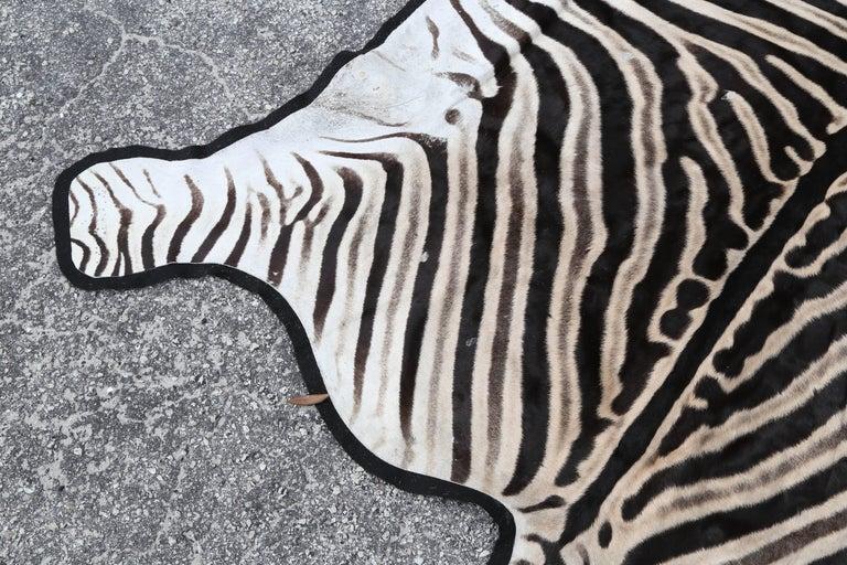 20th Century Fine Burchell Zebra Rug For Sale