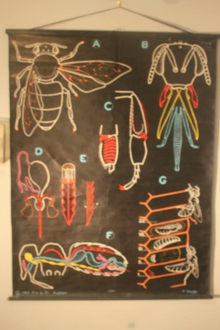 P.Sougy French Anatomy Chart at 1stdibs