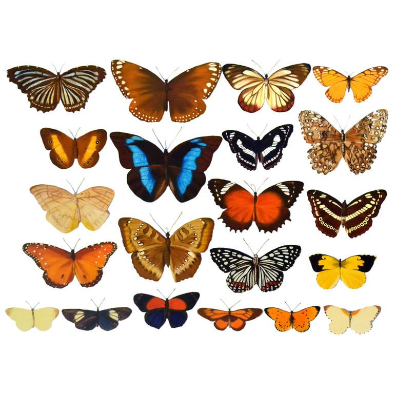 Large Scale Photorealistic Butterfly Painting
