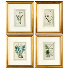 Set of Four English, Hand-Colored Floral Etchings