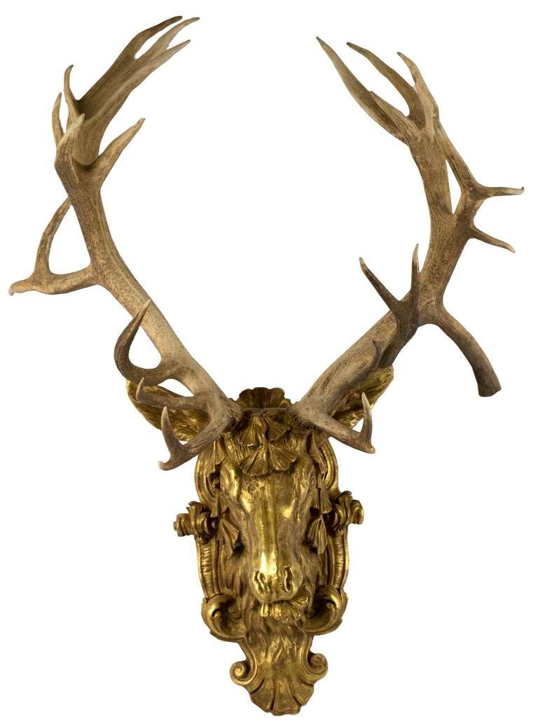 Deer Head Wall Art gilt red-deer stag head at 1stdibs