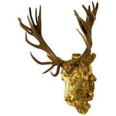 Gilt Red-Deer Stag Head