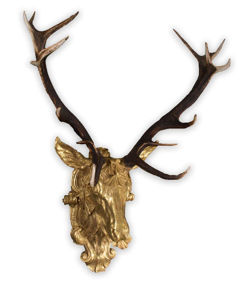 Red Deer Antlers Mounted On Gilt Stag S Head At 1stdibs