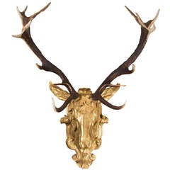 Red Deer Antlers Mounted on Gilt Stag's Head