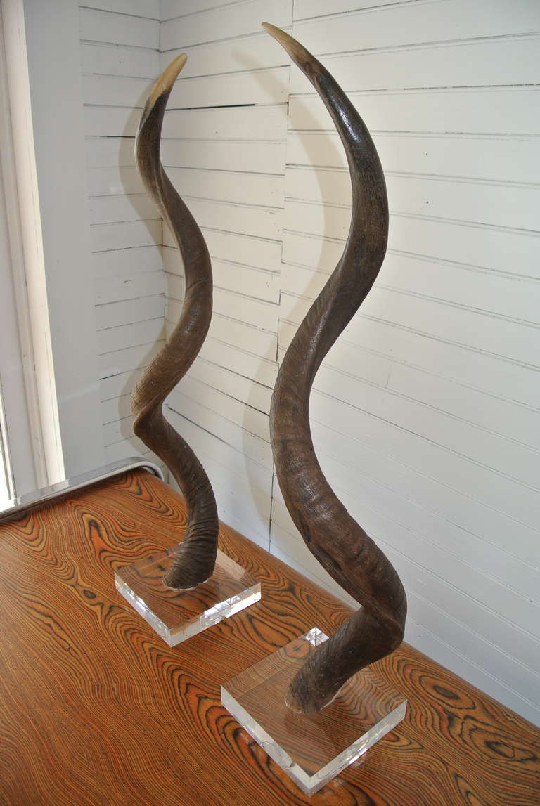 Pair Of African Kudu Horns Mounted On Acrylic Lucite Base