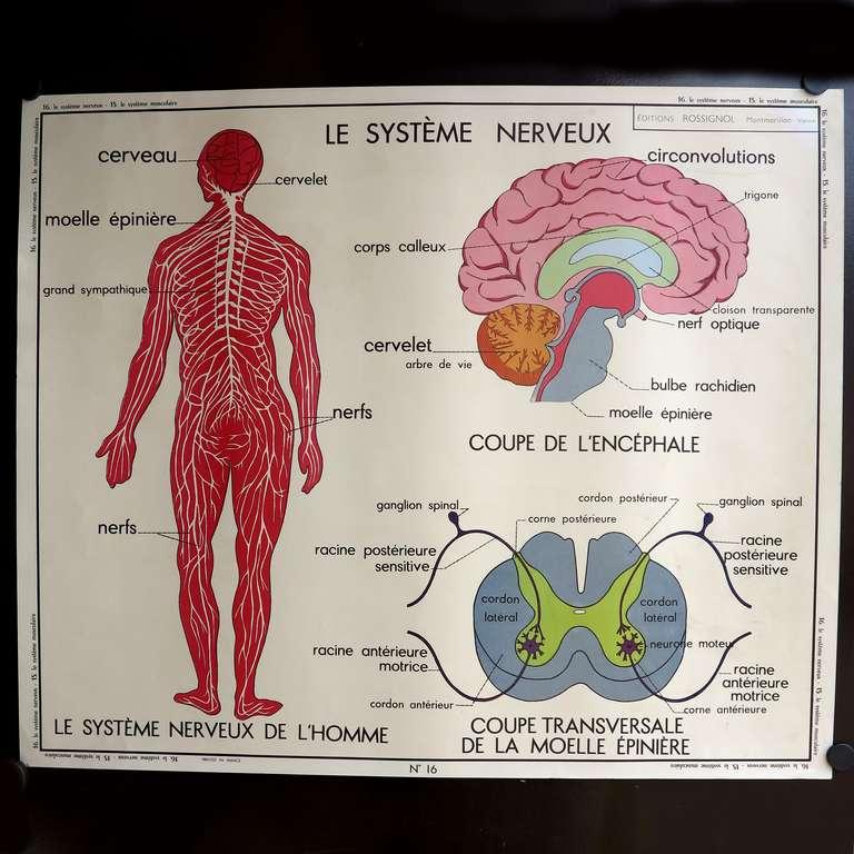 Human Anatomy Vintage Vintage Human Anatomy