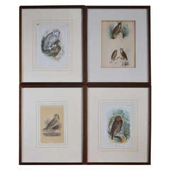 Set of Four 19th Century Framed Prints of Owls