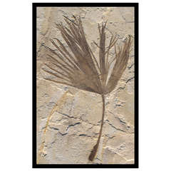 Large Palm, Frond Stone Fossil Wall Art Sculpture