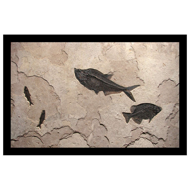 Large green river fossil wall art sculpture featuring for Fish wall sculptures