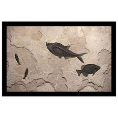 Large Green River Fossil Wall Art Sculpture Featuring Several Fish on Limestone