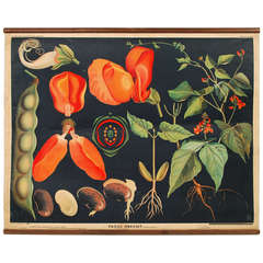 Botanical Lithography, Bohemian Manufacture, 1920s