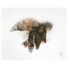 """Spotted eagle-owl"" Photograph by Sinke & Van Tongeren"