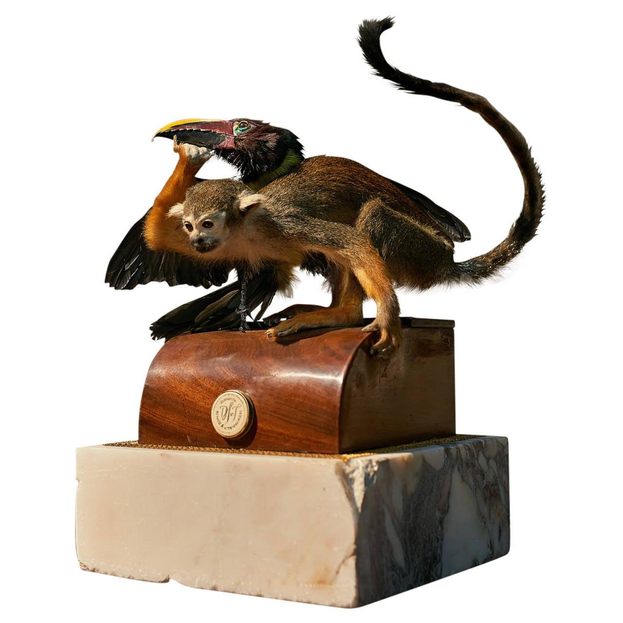 Fine Taxidermy Squirrel Monkey and Green Aracari by Sinke & Van Tongeren