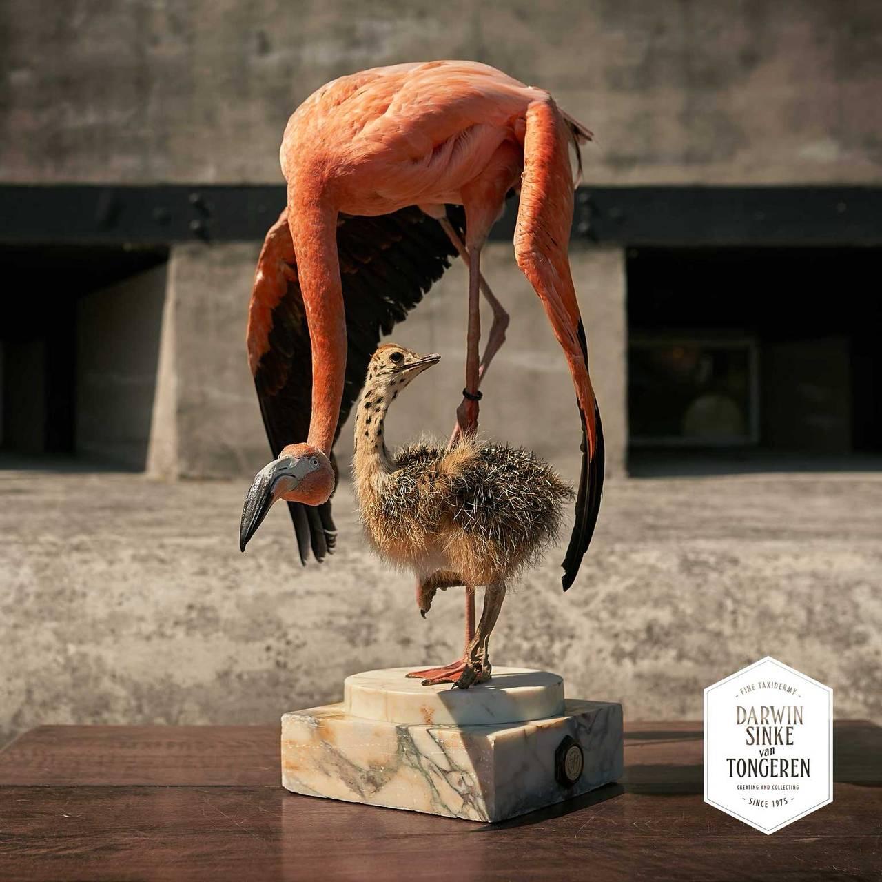 Fine Taxidermy Flamingo & Ostrich by Sinke & van Tongeren 3