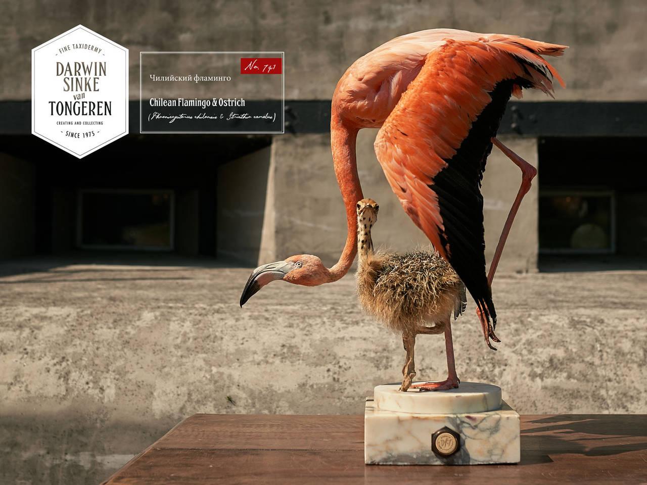 Fine Taxidermy Flamingo & Ostrich by Sinke & van Tongeren 2