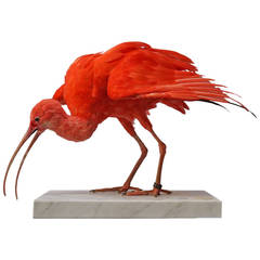 Taxidermy Study 'Scarlet Ibis' by Sinke & Van Tongeren