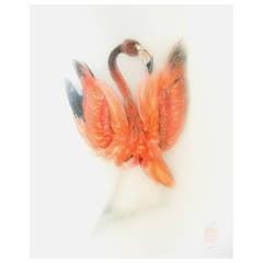 """Flamingo I"" Photograph by Sinke & Van Tongeren"