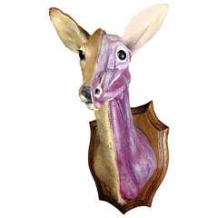 Rare Anatomic Muscle Study of Taxidermy Deers' Head
