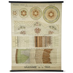 End of the 19th Century Botany Panel from Maison Deyrolle 'Stem Autonomy'