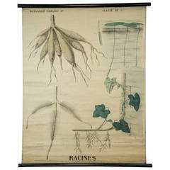 "End of the 19th Century Botany Panel from Maison Deyrolle ""Roots"""