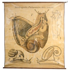 Educational Zoology Board by Dr Paul Pfurtscheller