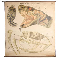Educational Zoology Board by Dr Paul Pfurtscheller