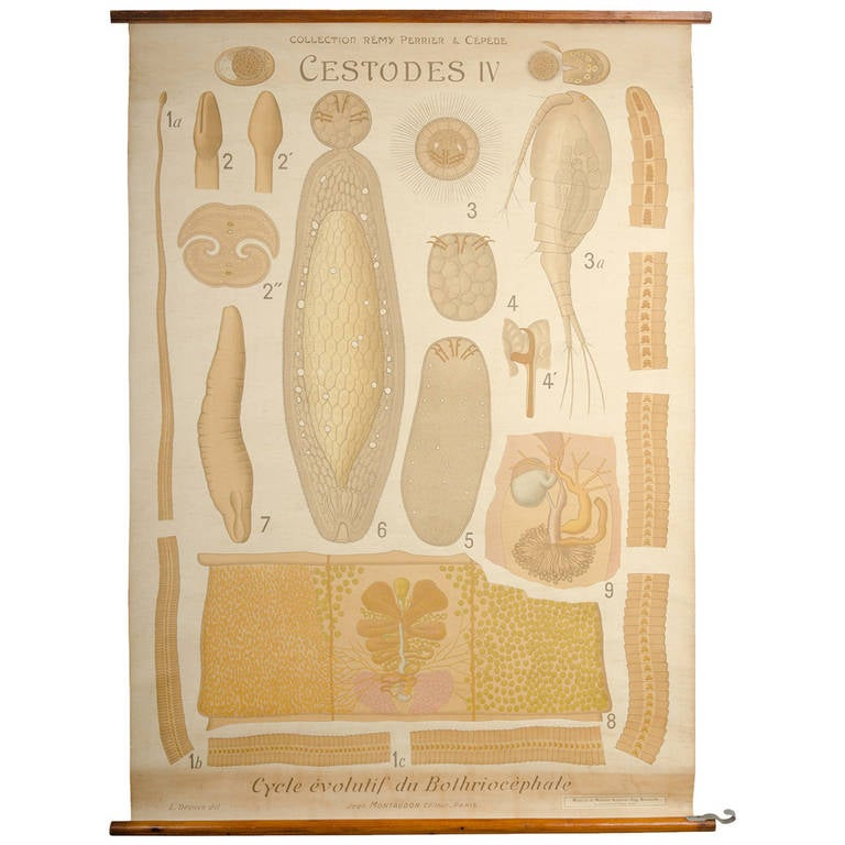 Educational Zoology Board Collection Remy Perrier & Cepede