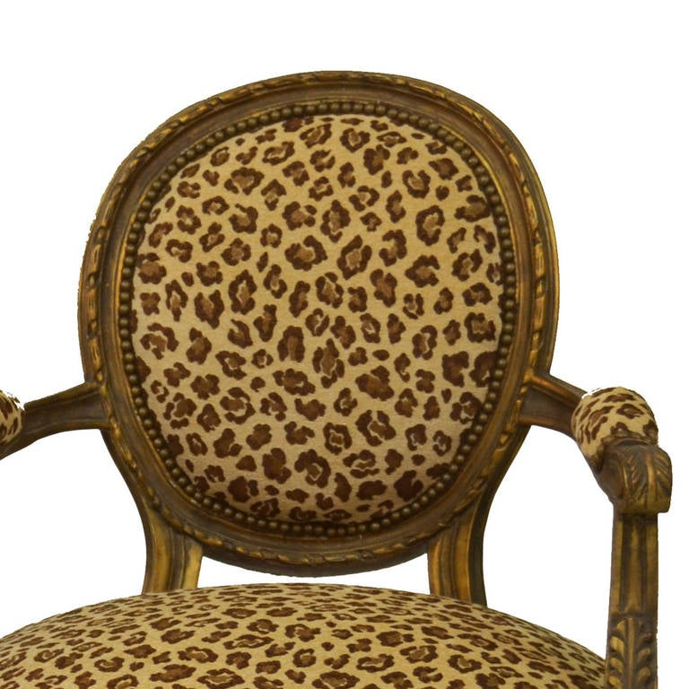 Pair of Louis XVI gilded armchairs with conical fluted legs, set back arms with padded armrests and hand carved decorative motifs. They are upholstered in a velvet designer cheetah print fabric with antique brass nailhead trim. These chairs are