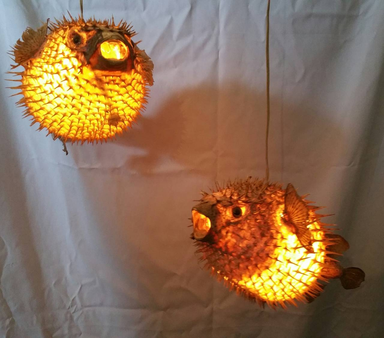 Pair of taxidermy puffer fish hanging pendant lamps at 1stdibs for Puffer fish lamp