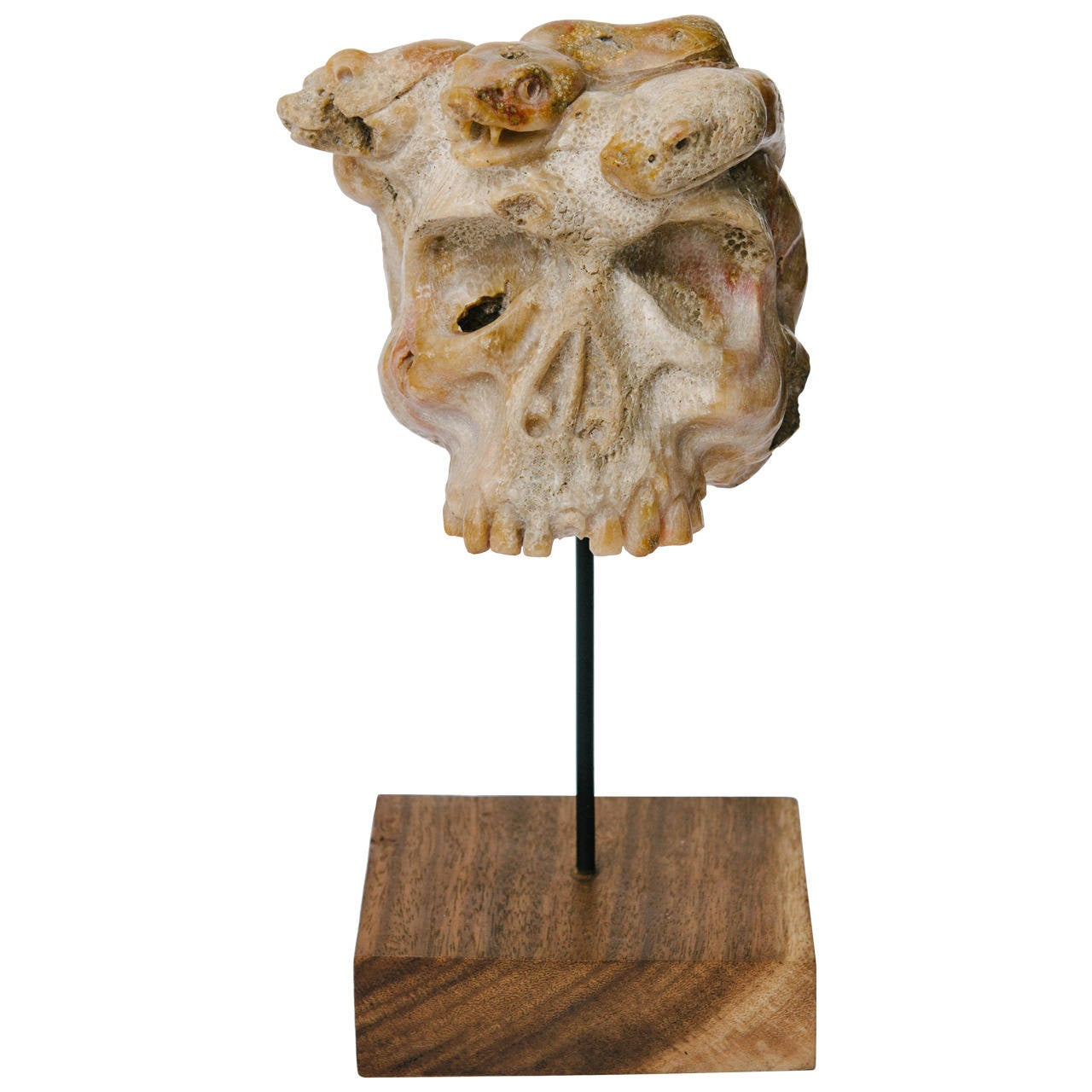 Carved Fossilized Coral Medusa Snake Skull