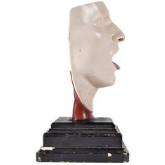 Anatomical Model of the Human Head by Franz Josef Steger