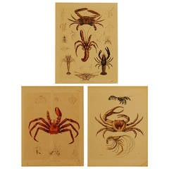 Set of Three Stuttgart Germany 19th Century Lithographs of Crabs