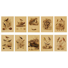 Set of Ten German 19th Century Hand-Colored Lithographs of Birds and Eggs