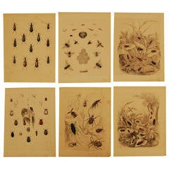 Set of Six German 19th Century Hand-Colored Lithographs of Beetles and Bees