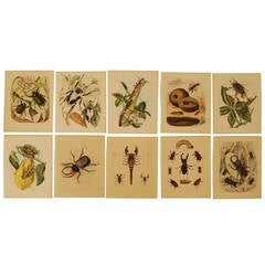 Setof Ten German 19th Century Hand-Colored Lithographs of Beetles