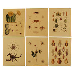 Set of Six Stuttgart Germany 19th Century Lithographs of Various Insects