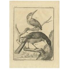 Antique Animal Print Illustrating Two Birds, circa 1790